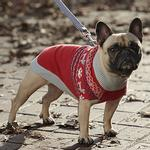 View Image 2 of Highland Dog Sweater - Pawesome