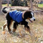 View Image 2 of Highline Fleece Dog Coat by Doggie Design - Blue and Black