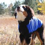 View Image 3 of Highline Fleece Dog Coat by Doggie Design - Blue and Black