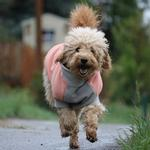 View Image 2 of Highline Fleece Dog Coat by Doggie Design - Coral and Gray