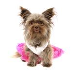View Image 3 of Hot Pink Cupcake Dog Dress by Pawpatu