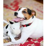 View Image 4 of HuggleHounds Barnyard Knotties Dog Toy - Cow