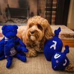 View Image 2 of Hugglehounds Durable Hanukkah Dreidel Wooly Dog Toy