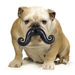 View Image 1 of Humunga Stache Dog Toy