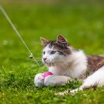 View Image 4 of HUNTER Dangler Ball Cat Toy by Laura