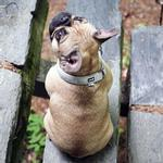 View Image 2 of Hurtta Casual Padded Dog Collar - Ash