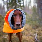 View Image 2 of Hurtta Extreme Warmer Dog Coat - Orange