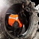 View Image 2 of Hurtta Polar Visibility Dog Vest - Orange