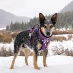 View Image 4 of Hurtta Weekend Warrior Dog Harness - Currant