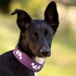 View Image 2 of Hurtta Weekend Warrior Dog Collar - Currant