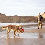 View Image 3 of Pacific Ring Dog Toy by RuffWear - Sockeye Red