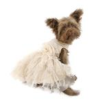 View Image 3 of Shining Dog Dress by Pawpatu - Ivory