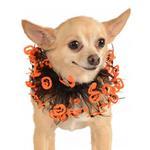 View Image 1 of Jack-O-Lantern Fancy Dog Collar Scrunchie