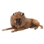 View Image 1 of King of the Jungle Lion Halloween Dog Costume
