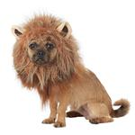 View Image 2 of King of the Jungle Lion Halloween Dog Costume