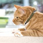 View Image 2 of Kitty Breakaway Cat Collar - Heart of Gold