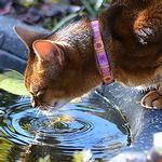 View Image 2 of Kitty Breakaway Cat Collar - Trendy Mehndi
