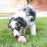 View Image 6 of Puppy KONG Rubber Dog Toy