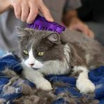 View Image 2 of KONG Zoom Groom Rubber Pet Grooming Brush for Cats