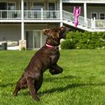 View Image 2 of Kurgo Classic Lawn Games Dog Toy - Doggie Darts