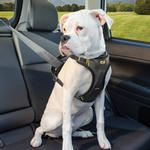 View Image 2 of Kurgo Impact Dog Harness - Black and Charcoal