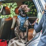 View Image 6 of Kurgo Journey Air Dog Harness - Coastal Blue