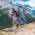 View Image 5 of Kurgo Journey Air Dog Harness - Coastal Blue