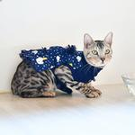View Image 6 of Pixie Turtleneck Cat Dress by Catspia - Navy
