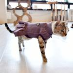 View Image 1 of Leah Turtleneck Cat Dress by Catspia - Violet