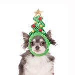 View Image 1 of Light Up Christmas Tree Dog Hat