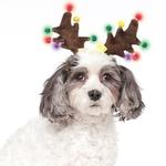 View Image 2 of Light Up Reindeer Antlers Dog Hat