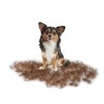 View Image 2 of Long Hair FURminator for Toy Dogs - Light Green