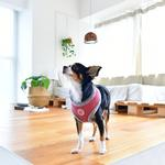 View Image 3 of Lucca Dog Harness by Pinkaholic - Dark Pink
