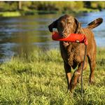 View Image 1 of Lunker Interactive Dog Toy by Ruffwear - Sockeye Red