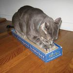 View Image 2 of Meow Town Corrugated Cat Scratcher