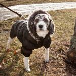 View Image 2 of Pet Life Metallic Ski Parka Dog Coat - Black