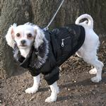 View Image 1 of Pet Life Metallic Ski Parka Dog Coat - Black