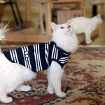 View Image 2 of Mies Vest Cat Shirt by Catspia - Navy