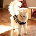 View Image 4 of Mies Vest Cat Shirt by Catspia - Navy