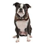 View Image 1 of Modern Zebra Neckguard Dog Collar by Puppia - Brown