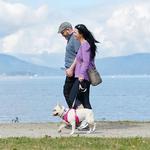 View Image 2 of Momentum Control Dog Harness - Fuchsia