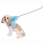 View Image 1 of My Little Pony Rainbow Dash Wing Dog Harness Costume