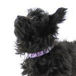 View Image 2 of Nirvana Adjustable Clip Dog Collar by RC Pet