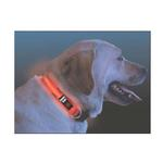 View Image 1 of Nite Dawg LED Dog Collar - Orange