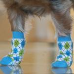 View Image 4 of Non-Skid Dog Socks by Doggie Design - Blue and Green Argyle