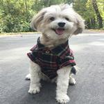 View Image 3 of Northern Pine Flannel Dog Shirt By Dog Threads