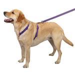 View Image 2 of Nylon Dog Harness by Zack & Zoey - Light Plum