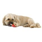 View Image 2 of Orbee-Tuff Lil' Bulb with Treat Spot by Planet Dog