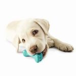 View Image 1 of Orbee-Tuff Pup Bone Toy by Planet Dog - Teal