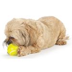 View Image 2 of Orbee-Tuff Sport Tennis Ball Dog Toy by Planet Dog
